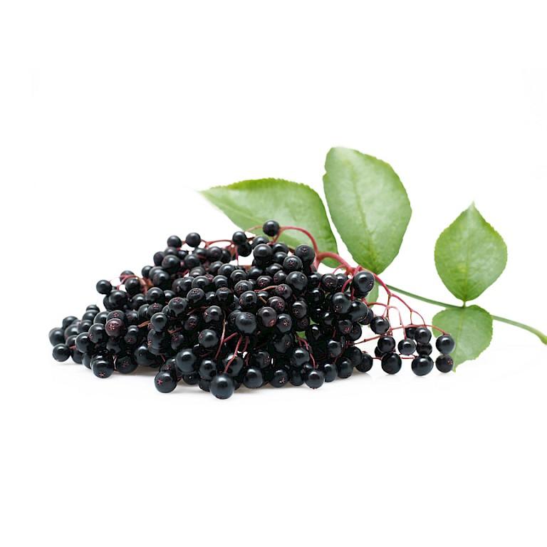 Elderberry powdered extract/Elderberry powder