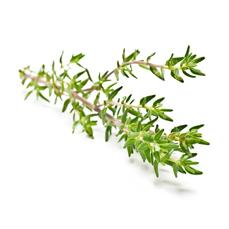 Thyme herb powdered extract